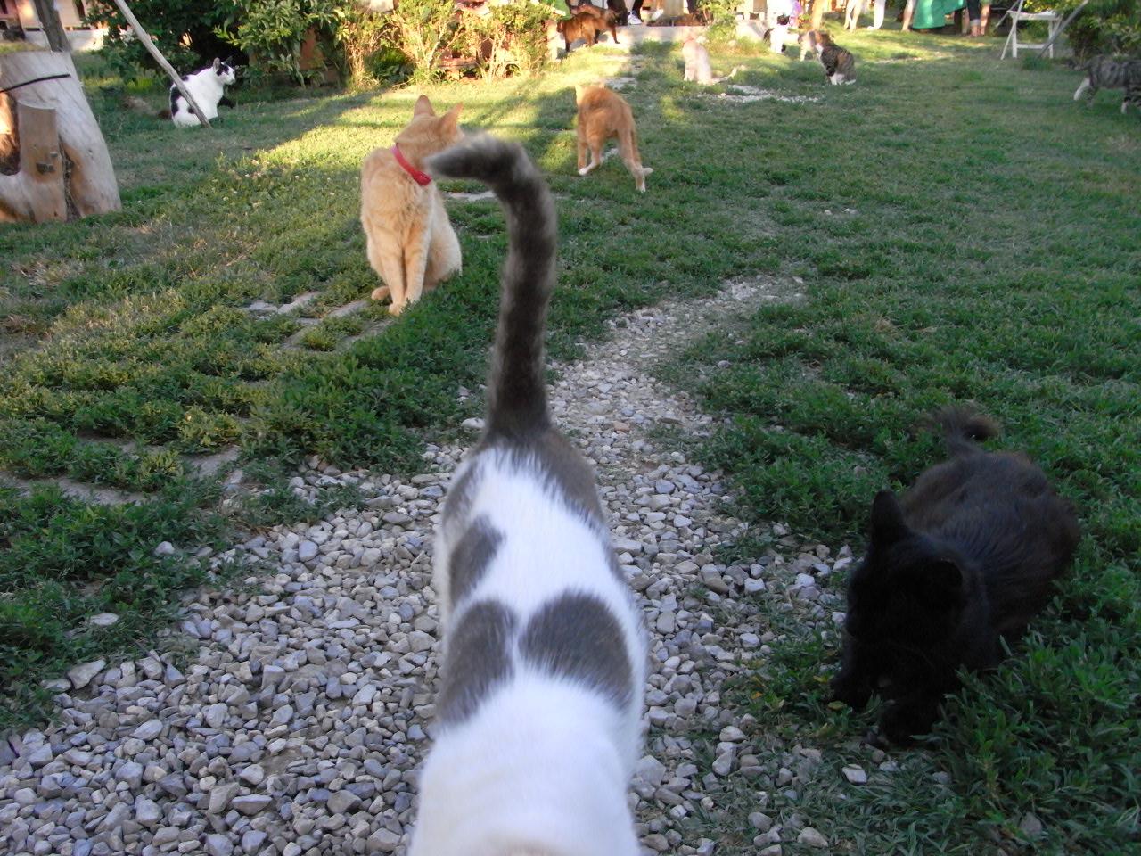 all'Oasi felina di Trieste 2012