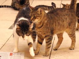 Gatti amici in Gattile
