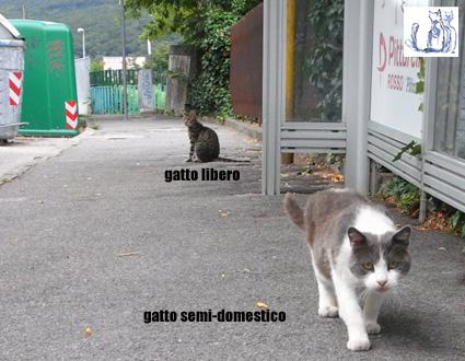 Associazione IL GATTILE onlus (Trieste)
