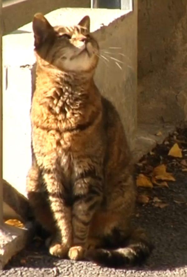 Un gatto della Piccola Parigi triestina, 2020.
